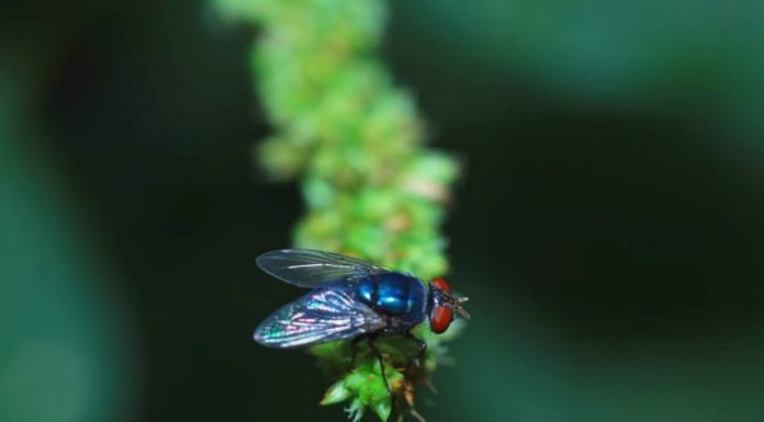 cara basmi larva lalat belatung tempayak realestat id dok