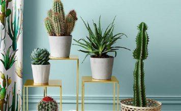 trik merawat tanaman kaktus di rumah, tips merawat kaktus di rumah