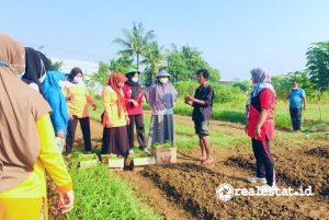 Pelatihan usaha dan pendampingan bertani kepada warga Karawang di sekitar KIIC (Foto: dok. Sinar Mas Land)