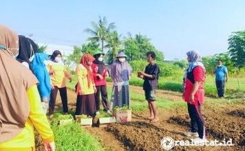 KIIC pelatihan pertanian kota Sinar Mas Land CSR realestat.id dok