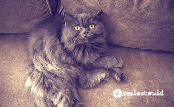 kucing hewan peliharaan pecinta penyayang binatang pixabay realestat.id dok