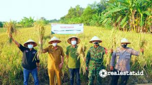 Program penanaman padi yang dibesut melalui Sharp Mapan sejak 5 Juli 2021 lalu memasuki masa panen mulai akhir September hingga awal Oktober 2021. (Foto: Dok. Sharp Indonesia)